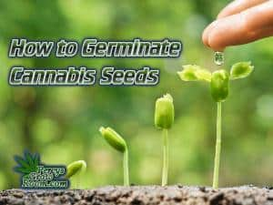 Cannabis seedling, above soil, Cannabis growers forum & community, How to grow cannabis, how to grow weed, a step by step guide to growing weed, cannabis growers forum, need help with sick plant, what's wrong with my cannabis plant, percys Grow Room, the Grow Room, percys Grow Guides, we'd growing forum, weed growers community, how to grow weed in coco, when is my cannabis plant ready for harvest, how to feed my cannabis plant, beginners guide to growing weed, how to grow weed for personal use, cannabis plant deficiency, how to germinate cannabis seeds, where to buy cannabis seeds, best weed growers website, Cannabis Growers forum, weed growers forum, How to grow legal cannabis, a step by step guide to growing weed, cannabis growing guide, tips for marijuana growers, growing cannabis plants for the first time, marijuana growers forum, marijuana growing tips, cannabis plant problems, cannabis plant help, marijuana growing expert advice