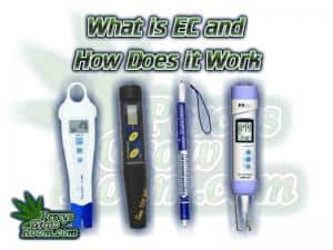 What is EC, and how does it work, Ec pens, Ec meters, How to grow legal cannabis, a step by step guide to growing weed, cannabis growing guide, tips for marijuana growers, growing cannabis plants for the first time, marijuana growers forum, marijuana growing tips, cannabis plant problems, cannabis plant help, marijuana growing expert advice. Percysgrowroom.com How to test EC, Ec meter, TDS meter, How to feed your cannabis plant, cannabis growers forum
