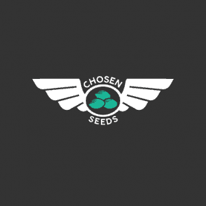 Chosen seeds, Cannabis growers forum & community, Different Types of Cannabis Seeds, How to grow cannabis, how to grow weed, a step by step guide to growing weed, cannabis growers forum, need help with sick plant, what's wrong with my cannabis plant, percys Grow Room, the Grow Room, percys Grow Guides, we'd growing forum, weed growers community, how to grow weed in coco, when is my cannabis plant ready for harvest, how to feed my cannabis plant, beginners guide to growing weed, how to grow weed for personal use, cannabis plant deficiency, how to germinate cannabis seeds, where to buy cannabis seeds, best weed growers website