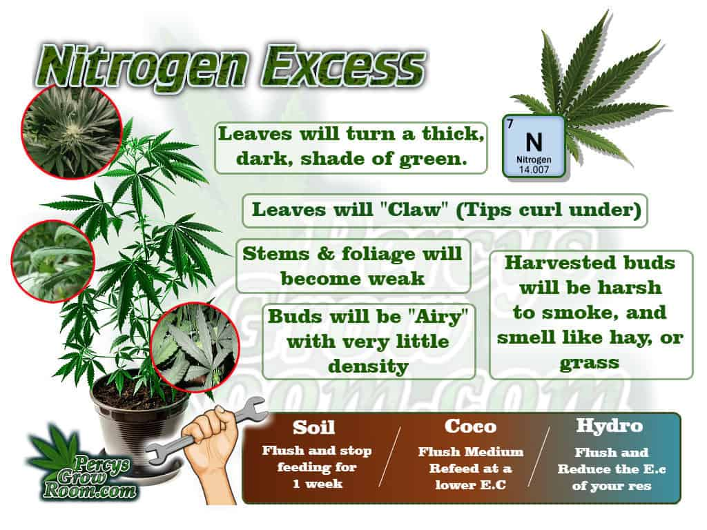 Macro and Micro Nutrients, A brief Description of Symptoms of Nitrogen Excess in a Cannabis Plant. Percys Grow Room.com And a Cannabis plant drawing with dark green leaves, Cannabis growers forum & community, How to grow cannabis, how to grow weed, a step by step guide to growing weed, cannabis growers forum, need help with sick plant, what's wrong with my cannabis plant, percys Grow Room, the Grow Room, percys Grow Guides, we'd growing forum, weed growers community, how to grow weed in coco, when is my cannabis plant ready for harvest, how to feed my cannabis plant, beginners guide to growing weed, how to grow weed for personal use, cannabis plant deficiency, how to germinate cannabis seeds, where to buy cannabis seeds, best weed growers website
