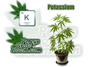 Potassium in cannabis plants, Potassium excess symptoms, Cannabis growers forum & community, How to grow cannabis, how to grow weed, a step by step guide to growing weed, cannabis growers forum, need help with sick plant, what's wrong with my cannabis plant, percys Grow Room, the Grow Room, percys Grow Guides, we'd growing forum, weed growers community, how to grow weed in coco, when is my cannabis plant ready for harvest, how to feed my cannabis plant, beginners guide to growing weed, how to grow weed for personal use, cannabis plant deficiency, how to germinate cannabis seeds, where to buy cannabis seeds, best weed growers website