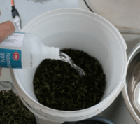 Pouring isopropyl alcohol into a bucket, how to make RSO, cannabis extracts, medical cannabis, cannabis terminology, cannabis slang, Cannabis growers forum & community, How to grow cannabis, how to grow weed, a step by step guide to growing weed, cannabis growers forum, need help with sick plant, what's wrong with my cannabis plant, percy's Grow Room, the Grow Room, Cannabis Grow Guides, weed growing forum, weed growers community, how to grow weed in coco, when is my cannabis plant ready for harvest, how to feed my cannabis plant, beginners guide to growing weed, how to grow weed for personal use, cannabis plant deficiency, how to germinate cannabis seeds, where to buy cannabis seeds, best weed growers website, Learn to grow cannabis, is it easy to grow weed