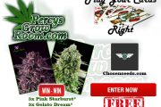 win free cannabis seeds, play your cards right, percys play your cards right, anesia seeds, pink starburst, gelato dream, free seeds, Cannabis growers forum & community, How to grow cannabis, how to grow weed, a step by step guide to growing weed, cannabis growers forum, need help with sick plant, what's wrong with my cannabis plant, percys Grow Room, the Grow Room, percys Grow Guides, we'd growing forum, weed growers community, how to grow weed in coco, when is my cannabis plant ready for harvest, how to feed my cannabis plant, beginners guide to growing weed, how to grow weed for personal use, cannabis plant deficiency, how to germinate cannabis seeds, where to buy cannabis seeds, best weed growers website