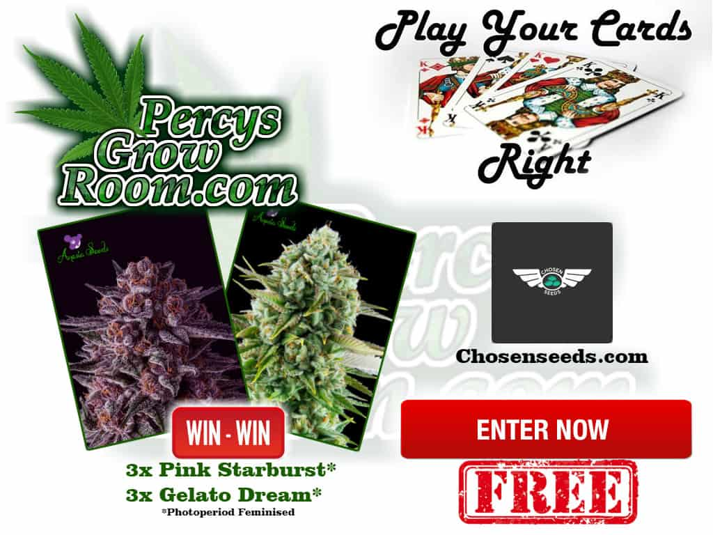 percy's play your cards right, win free cannabis seeds, easy game to play, competitions to win free cannabis seeds, Cannabis growers forum & community, How to grow cannabis, how to grow weed, a step by step guide to growing weed, cannabis growers forum, need help with sick plant, what's wrong with my cannabis plant, percys Grow Room, the Grow Room, percys Grow Guides, we'd growing forum, weed growers community, how to grow weed in coco, when is my cannabis plant ready for harvest, how to feed my cannabis plant, beginners guide to growing weed, how to grow weed for personal use, cannabis plant deficiency, how to germinate cannabis seeds, where to buy cannabis seeds, best weed growers website