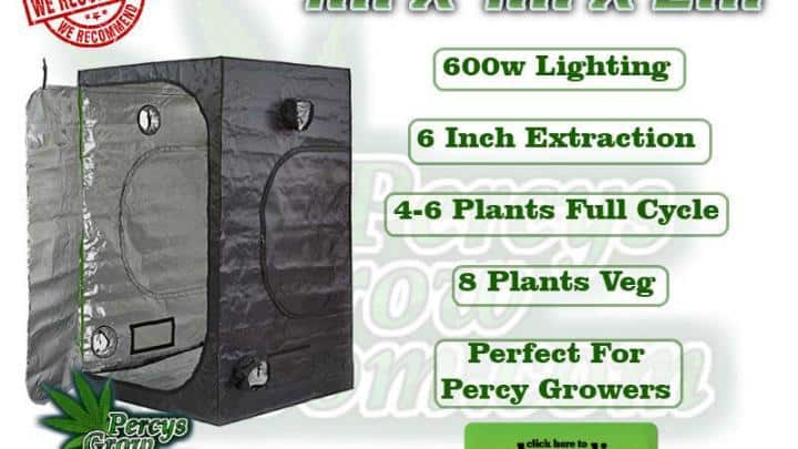 1m x 1m x 2m grow tent, 600w lighting, 6 inch extraction, 4-6 plants full cycle, 8 plants veg, Perfect for PErcy Growers, Cannabis growers forum & community, How to grow cannabis, how to grow weed, a step by step guide to growing weed, cannabis growers forum, need help with sick plant, what's wrong with my cannabis plant, percys Grow Room, the Grow Room, percys Grow Guides, we'd growing forum, weed growers community, how to grow weed in coco, when is my cannabis plant ready for harvest, how to feed my cannabis plant, beginners guide to growing weed, how to grow weed for personal use, cannabis plant deficiency, how to germinate cannabis seeds, where to buy cannabis seeds, best weed growers website, how to dry cannabis