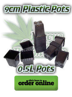 9 cm plastic pots for growing cannabis, Cannabis growers forum & community, How to grow cannabis, how to grow weed, a step by step guide to growing weed, cannabis growers forum, need help with sick plant, what's wrong with my cannabis plant, percys Grow Room, the Grow Room, percys Grow Guides, we'd growing forum, weed growers community, how to grow weed in coco, when is my cannabis plant ready for harvest, how to feed my cannabis plant, beginners guide to growing weed, how to grow weed for personal use, cannabis plant deficiency, how to germinate cannabis seeds, where to buy cannabis seeds, best weed growers website