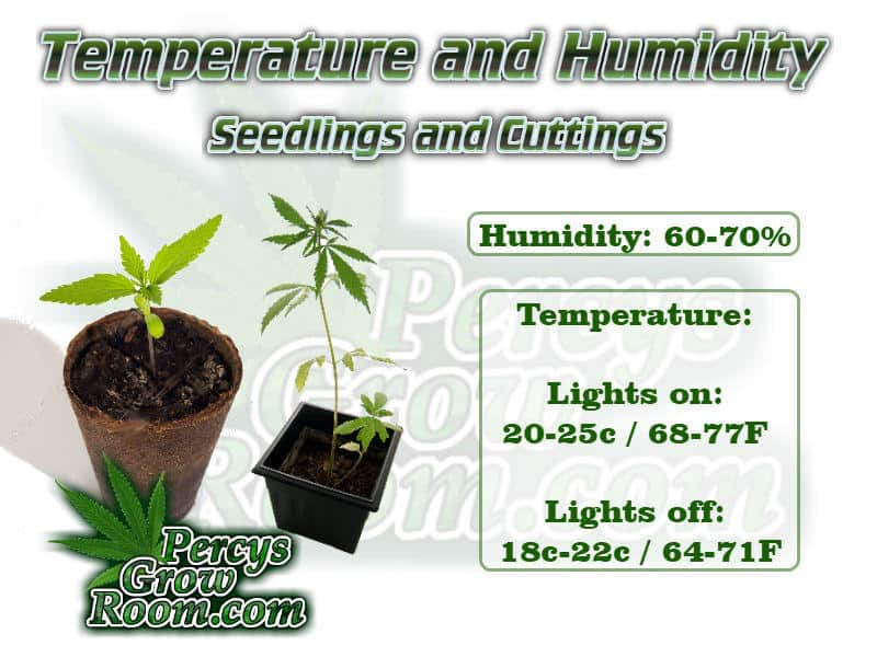 Temperature and humidity for seedling cannabis plant, Cannabis growers forum & community, How to grow cannabis, how to grow weed, a step by step guide to growing weed, cannabis growers forum, need help with sick plant, what's wrong with my cannabis plant, percys Grow Room, the Grow Room, percys Grow Guides, we'd growing forum, weed growers community, how to grow weed in coco, when is my cannabis plant ready for harvest, how to feed my cannabis plant, beginners guide to growing weed, how to grow weed for personal use, cannabis plant deficiency, how to germinate cannabis seeds, where to buy cannabis seeds, best weed growers website