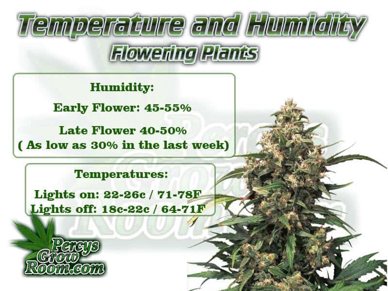 Temperature and humidity for flowering cannabis plant, Cannabis growers forum & community, How to grow cannabis, how to grow weed, a step by step guide to growing weed, cannabis growers forum, need help with sick plant, what's wrong with my cannabis plant, percys Grow Room, the Grow Room, percys Grow Guides, we'd growing forum, weed growers community, how to grow weed in coco, when is my cannabis plant ready for harvest, how to feed my cannabis plant, beginners guide to growing weed, how to grow weed for personal use, cannabis plant deficiency, how to germinate cannabis seeds, where to buy cannabis seeds, best weed growers website. How to grow cannabis, how to grow weed, a step by step guide to growing weed, cannabis growers forum, need help with sick plant, what's wrong with my cannabis plant, percys Grow Room, the Grow Room, percys Grow Guides, we'd growing forum, weed growers community, how to grow weed in coco, when is my cannabis plant ready for harvest, how to feed my cannabis plant, beginners guide to growing weed, how to grow weed for personal use, cannabis plant deficiency, how to germinate cannabis seeds, where to buy cannabis seeds, best weed growers website, Cannabis Growers forum, weed growers forum, How to grow legal cannabis, a step by step guide to growing weed, cannabis growing guide, tips for marijuana growers, growing cannabis plants for the first time, marijuana growers forum, marijuana growing tips, cannabis plant problems, cannabis plant help, marijuana growing expert advice