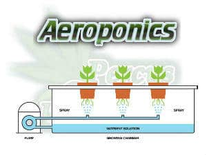Aeroponics, what is aeroponics, Cannabis growers forum & community, How to grow cannabis, how to grow weed, a step by step guide to growing weed, cannabis growers forum, need help with sick plant, what's wrong with my cannabis plant, percy's Grow Room, the Grow Room, Cannabis Grow Guides, weed growing forum, weed growers community, how to grow weed in coco, when is my cannabis plant ready for harvest, how to feed my cannabis plant, beginners guide to growing weed, how to grow weed for personal use, cannabis plant deficiency, how to germinate cannabis seeds, where to buy cannabis seeds, best weed growers website, Learn to grow cannabis, is it easy to grow weed