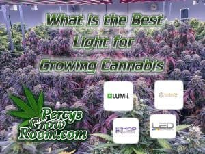 What is the best lgiht for growing cannabis, HPS, MH, LED, CMH, CMD, Lighting, Metal Haldie, how to fix nuit burn on a cannabis plant, cannabis plant problems, how to fix a sick cannabis plant, Cannabis growers forum & community, How to grow cannabis, how to grow weed, a step by step guide to growing weed, cannabis growers forum, need help with sick plant, what's wrong with my cannabis plant, percys Grow Room, the Grow Room, percys Grow Guides, we'd growing forum, weed growers community, how to grow weed in coco, when is my cannabis plant ready for harvest, how to feed my cannabis plant, beginners guide to growing weed, how to grow weed for personal use, cannabis plant deficiency, how to germinate cannabis seeds, where to buy cannabis seeds, best weed growers website