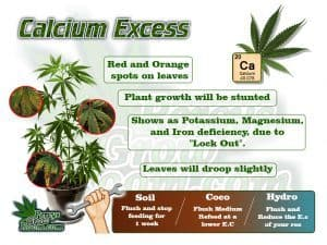 Symptoms of calcium excess in a cannabis plant, cannabis plant deficiency, how to fix a cannabis plant deficiency, nuit burn on my cannabis plant, nuit burn on a cannabis plant, how to fix nuit burn on a cannabis plant, cannabis plant problems, how to fix a sick cannabis plant, Cannabis growers forum & community, How to grow cannabis, how to grow weed, a step by step guide to growing weed, cannabis growers forum, need help with sick plant, what's wrong with my cannabis plant, percys Grow Room, the Grow Room, percys Grow Guides, we'd growing forum, weed growers community, how to grow weed in coco, when is my cannabis plant ready for harvest, how to feed my cannabis plant, beginners guide to growing weed, how to grow weed for personal use, cannabis plant deficiency, how to germinate cannabis seeds, where to buy cannabis seeds, best weed growers website