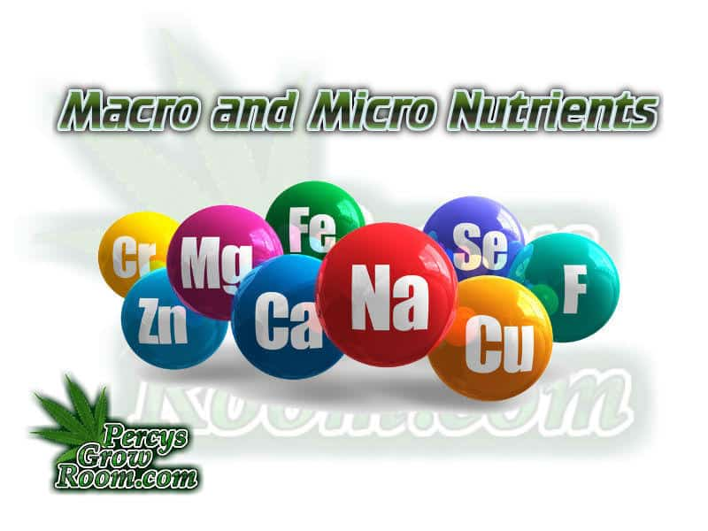 Macro and Micro Nutrients, cannabis plant nutrients, Cannabis growers forum & community, How to grow cannabis, how to grow weed, a step by step guide to growing weed, cannabis growers forum, need help with sick plant, what's wrong with my cannabis plant, percy's Grow Room, the Grow Room, Cannabis Grow Guides, weed growing forum, weed growers community, how to grow weed in coco, when is my cannabis plant ready for harvest, how to feed my cannabis plant, beginners guide to growing weed, how to grow weed for personal use, cannabis plant deficiency, how to germinate cannabis seeds, where to buy cannabis seeds, best weed growers website, Learn to grow cannabis, is it easy to grow weed,, Cannabis Growers forum, weed growers forum, How to grow legal cannabis, a step by step guide to growing weed, cannabis growing guide, tips for marijuana growers, growing cannabis plants for the first time, marijuana growers forum, marijuana growing tips, cannabis plant problems, cannabis plant help, marijuana growing expert advice