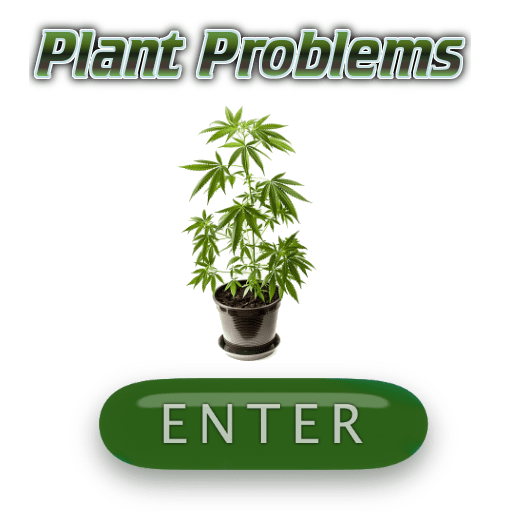 Plant problem, Cannabis growers forum & community, How to grow cannabis, how to grow weed, a step by step guide to growing weed, cannabis growers forum, need help with sick plant, what's wrong with my cannabis plant, percys Grow Room, the Grow Room, percys Grow Guides, we'd growing forum, weed growers community, how to grow weed in coco, when is my cannabis plant ready for harvest, how to feed my cannabis plant, beginners guide to growing weed, how to grow weed for personal use, cannabis plant deficiency, how to germinate cannabis seeds, where to buy cannabis seeds, best weed growers website