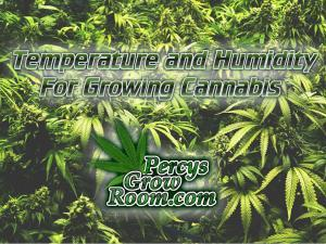 Temperature and humidity for growing cannabis, Cannabis growers forum & community, How to grow cannabis, how to grow weed, a step by step guide to growing weed, cannabis growers forum, need help with sick plant, what's wrong with my cannabis plant, percys Grow Room, the Grow Room, percys Grow Guides, we'd growing forum, weed growers community, how to grow weed in coco, when is my cannabis plant ready for harvest, how to feed my cannabis plant, beginners guide to growing weed, how to grow weed for personal use, cannabis plant deficiency, how to germinate cannabis seeds, where to buy cannabis seeds, best weed growers website