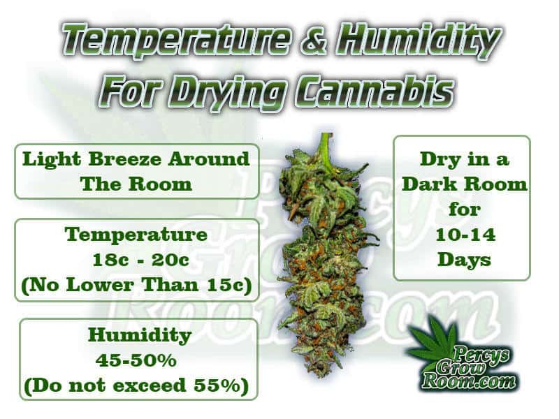 temps and humidity for drying cannabis, cannabis growers forum, need help with sick plant, what's wrong with my cannabis plant, percys Grow Room, the Grow Room, percys Grow Guides, we'd growing forum, weed growers community, how to grow weed in coco, when is my cannabis plant ready for harvest, how to feed my cannabis plant, beginners guide to growing weed, how to grow weed for personal use, cannabis plant deficiency, how to germinate cannabis seeds, where to buy cannabis seeds, best weed growers website, Cannabis Growers forum, weed growers forum, How to grow legal cannabis, a step by step guide to growing weed, cannabis growing guide, tips for marijuana growers, growing cannabis plants for the first time, marijuana growers forum, marijuana growing tips, cannabis plant problems, cannabis plant help, marijuana growing expert advice