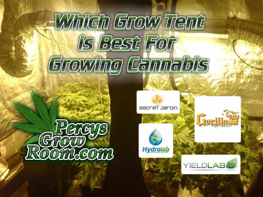 Which grow tent is best for growing cannabis, 60cm x 60cm grow tent, 1m x 1m x 2m, grow tent, 1.2m x1.2m x 2m grow tent, 1.2 x 2.4 x 2m grow tent, nuit burn on my cannabis plant, nuit burn on a cannabis plant, how to fix nuit burn on a cannabis plant, cannabis plant problems, how to fix a sick cannabis plant, Cannabis growers forum & community, How to grow cannabis, how to grow weed, a step by step guide to growing weed, cannabis growers forum, need help with sick plant, what's wrong with my cannabis plant, percys Grow Room, the Grow Room, percys Grow Guides, we'd growing forum, weed growers community, how to grow weed in coco, when is my cannabis plant ready for harvest, how to feed my cannabis plant, beginners guide to growing weed, how to grow weed for personal use, cannabis plant deficiency, how to germinate cannabis seeds, where to buy cannabis seeds, best weed growers website