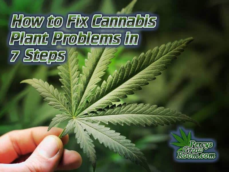 How to fix a sick cannabis plant, diagnose a sick cannabis plant, cannabis plant problems, how to fix cannabis plant problems, Cannabis growers forum & community, How to grow cannabis, how to grow weed, a step by step guide to growing weed, cannabis growers forum, need help with sick plant, what's wrong with my cannabis plant, percy's Grow Room, the Grow Room, Cannabis Grow Guides, weed growing forum, weed growers community, how to grow weed in coco, when is my cannabis plant ready for harvest, how to feed my cannabis plant, beginners guide to growing weed, how to grow weed for personal use, cannabis plant deficiency, how to germinate cannabis seeds, where to buy cannabis seeds, best weed growers website, Learn to grow cannabis, is it easy to grow weed,