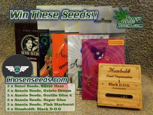 Percys pick a card chosen seeds comp, How to grow cannabis, how to grow weed, a step by step guide to growing weed, cannabis growers forum, need help with sick plant, what's wrong with my cannabis plant, percys Grow Room, the Grow Room, percys Grow Guides, we'd growing forum, weed growers community, how to grow weed in coco, when is my cannabis plant ready for harvest, how to feed my cannabis plant, beginners guide to growing weed, how to grow weed for personal use, cannabis plant deficiency, how to germinate cannabis seeds, where to buy cannabis seeds, best weed growers website, Cannabis Growers forum, weed growers forum, How to grow legal cannabis, a step by step guide to growing weed, cannabis growing guide, tips for marijuana growers, growing cannabis plants for the first time, marijuana growers forum, marijuana growing tips, cannabis plant problems, cannabis plant help, marijuana growing expert advice