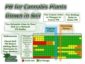 Ph chart for growing cannabis, PH charts for growing cannabis in soil, how to adjust ph, what is the best ph for growing cannabis, easily to follow ph chart, for growing cannabis, Cannabis growers forum & community, How to grow cannabis, how to grow weed, a step by step guide to growing weed, cannabis growers forum, need help with sick plant, what's wrong with my cannabis plant, percy's Grow Room, the Grow Room, Cannabis Grow Guides, weed growing forum, weed growers community, how to grow weed in coco, when is my cannabis plant ready for harvest, how to feed my cannabis plant, beginners guide to growing weed, how to grow weed for personal use, cannabis plant deficiency, how to germinate cannabis seeds, where to buy cannabis seeds, best weed growers website, Learn to grow cannabis, is it easy to grow weed, Cannabis Growers forum, weed growers forum, How to grow legal cannabis, a step by step guide to growing weed, cannabis growing guide, tips for marijuana growers, growing cannabis plants for the first time, marijuana growers forum, marijuana growing tips, cannabis plant problems, cannabis plant help, marijuana growing expert advice, Percys Grow Room
