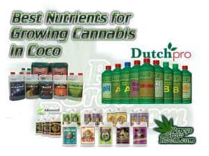 Best nutrients for growing cannabis in coco, Dutch pro, Canna, Advanced Nutirents, What nutrients to use to grow cannabis,, Help diagnosing a cannabis plant problem, plant deficiency guides, grow cannabis, how to grow weed, a step by step guide to growing weed, cannabis growers forum, need help with sick plant, what's wrong with my cannabis plant, percys Grow Room, the Grow Room, percys Grow Guides, we'd growing forum, weed growers community, how to grow weed in coco, when is my cannabis plant ready for harvest, how to feed my cannabis plant, beginners guide to growing weed, how to grow weed for personal use, cannabis plant deficiency, how to germinate cannabis seeds, where to buy cannabis seeds, best weed growers website, Cannabis Growers forum, weed growers forum, How to grow legal cannabis, a step by step guide to growing weed, cannabis growing guide, tips for marijuana growers, growing cannabis plants for the first time, marijuana growers forum, marijuana growing tips, cannabis plant problems, cannabis plant help, marijuana growing expert advice