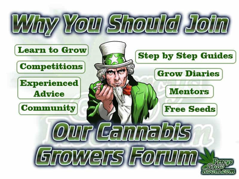 why you should join our cannabis growers forum,
