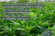 Does Playing Music to Your Plants Help Them Grow?