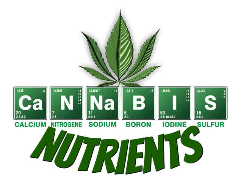 guides on cannabis plant nutrients, what shoul d I feed my cannabis plant, what plant food to give weed plant, grow cannabis, how to grow weed, a step by step guide to growing weed, cannabis growers forum, need help with sick plant, what's wrong with my cannabis plant, percys Grow Room, the Grow Room, percys Grow Guides, we'd growing forum, weed growers community, how to grow weed in coco, when is my cannabis plant ready for harvest, how to feed my cannabis plant, beginners guide to growing weed, how to grow weed for personal use, cannabis plant deficiency, how to germinate cannabis seeds, where to buy cannabis seeds, best weed growers website, Cannabis Growers forum, weed growers forum, How to grow legal cannabis, a step by step guide to growing weed, cannabis growing guide, tips for marijuana growers, growing cannabis plants for the first time, marijuana growers forum, marijuana growing tips, cannabis plant problems, cannabis plant help, marijuana growing expert advice