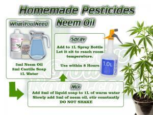 how to make neem oil spray for killing bugs on a cannabis plant, homemade pesticides,, grow cannabis, how to grow weed, a step by step guide to growing weed, cannabis growers forum, need help with sick plant, what's wrong with my cannabis plant, percys Grow Room, the Grow Room, percys Grow Guides, we'd growing forum, weed growers community, how to grow weed in coco, when is my cannabis plant ready for harvest, how to feed my cannabis plant, beginners guide to growing weed, how to grow weed for personal use, cannabis plant deficiency, how to germinate cannabis seeds, where to buy cannabis seeds, best weed growers website, Cannabis Growers forum, weed growers forum, How to grow legal cannabis, a step by step guide to growing weed, cannabis growing guide, tips for marijuana growers, growing cannabis plants for the first time, marijuana growers forum, marijuana growing tips, cannabis plant problems, cannabis plant help, marijuana growing expert advice