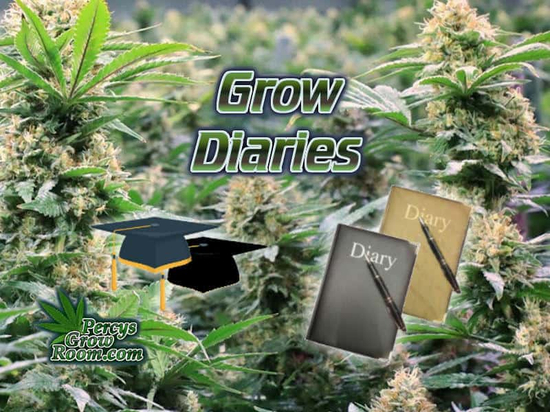 cannabis grow diaries, how to feed my cannabis plant, beginners guide to growing weed, how to grow weed for personal use, cannabis plant deficiency, how to germinate cannabis seeds, where to buy cannabis seeds, best weed growers website, Cannabis Growers forum, weed growers forum, How to grow legal cannabis, a step by step guide to growing weed, cannabis growing guide, tips for marijuana growers, growing cannabis plants for the first time, marijuana growers forum, marijuana growing tips, cannabis plant problems, cannabis plant help, marijuana growing expert advice