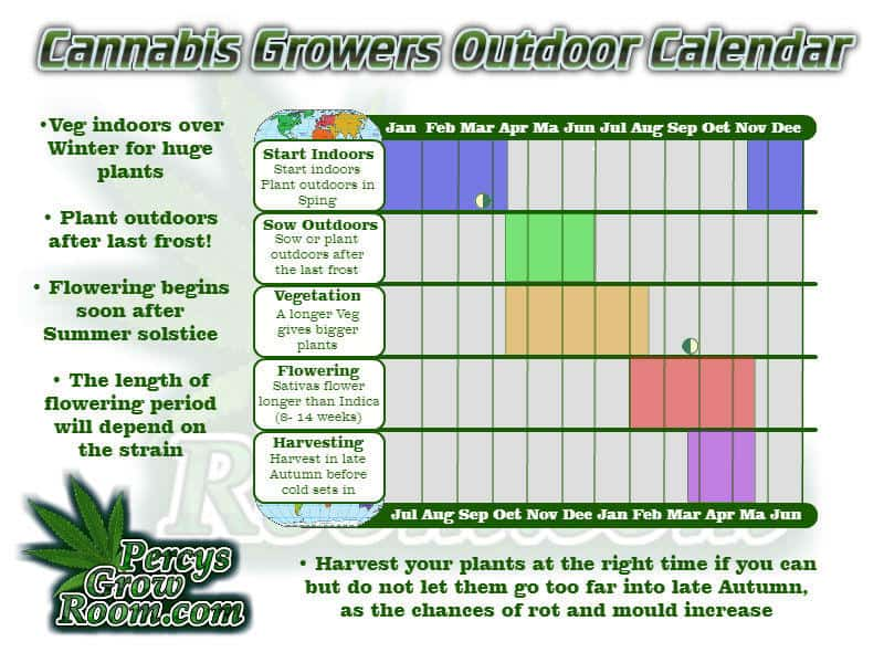 Calendar for growing cannabis outdoors, Cannabis light cycles