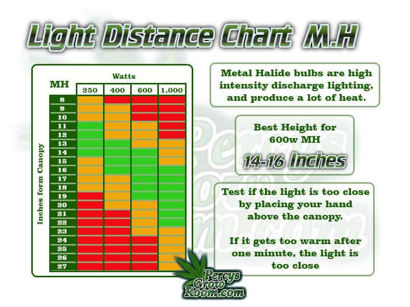 Light distance chart for growing cannabis under MH, beginners guide to growing weed, how to grow weed for personal use, cannabis plant deficiency, how to germinate cannabis seeds, where to buy cannabis seeds, best weed growers website, Cannabis Growers forum, weed growers forum, How to grow legal cannabis, a step by step guide to growing weed, cannabis growing guide, tips for marijuana growers, growing cannabis plants for the first time, marijuana growers forum, marijuana growing tips, cannabis plant problems, cannabis plant help, marijuana growing expert advice
