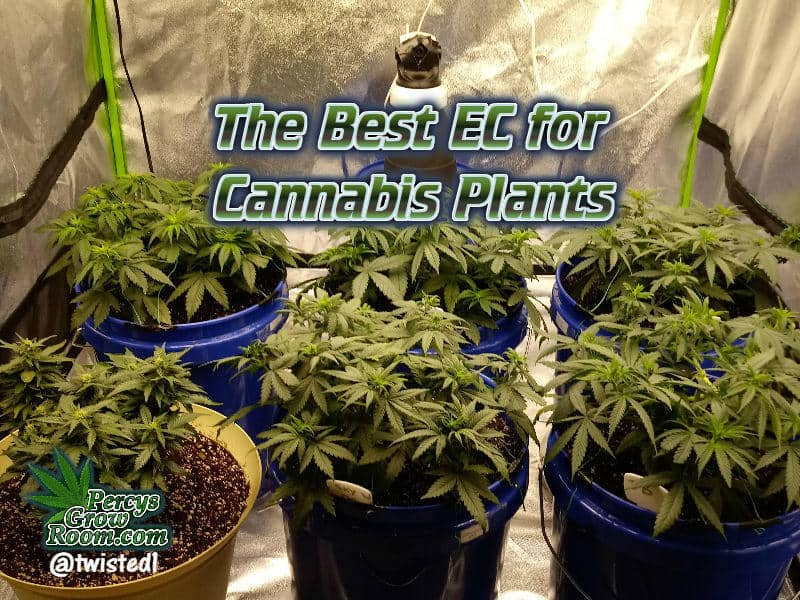 the best EC for Cannabis Plants, PPM to EC conversion charts, what EC meter to buy for growing cannabis, , best ph tester, beginners guide to growing weed, how to grow weed for personal use, cannabis plant deficiency, how to germinate cannabis seeds, where to buy cannabis seeds, best weed growers website, Cannabis Growers forum, weed growers forum, How to grow legal cannabis, a step by step guide to growing weed, cannabis growing guide, tips for marijuana growers, growing cannabis plants for the first time, marijuana growers forum, marijuana growing tips, cannabis plant problems, cannabis plant help, marijuana growing expert advice
