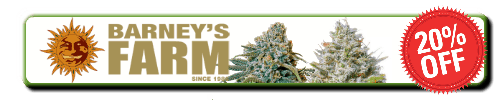 Barneys Farm, best seedbank for cannabis seeds, Cannabis growers forum & community, How to grow cannabis, how to grow weed, a step by step guide to growing weed, cannabis growers forum, need help with sick plant, what's wrong with my cannabis plant, percys Grow Room, the Grow Room, percys Grow Guides, we'd growing forum, weed growers community, how to grow weed in coco, when is my cannabis plant ready for harvest, how to feed my cannabis plant, beginners guide to growing weed, how to grow weed for personal use, cannabis plant deficiency, how to germinate cannabis seeds, where to buy cannabis seeds, best weed growers website