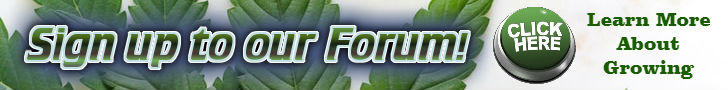 Weed growing forum, Cannabis Growing forum, cannabis growers forum, weed gorwers forum, sign up banner, percys grow room, learn how to grow your own cannabis