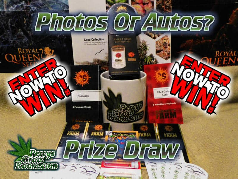 win photos or autos competition, percy's grow room, cannabis growers forum,