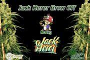 Mackys Jack Herrer grow off diary feature image, cannabis growers forum, Percys Grow Room