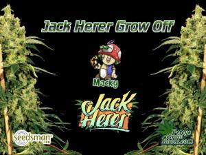 Mackys Jack Herrer grow off diary feature image, cannabis growers forum, Percys Grow Room