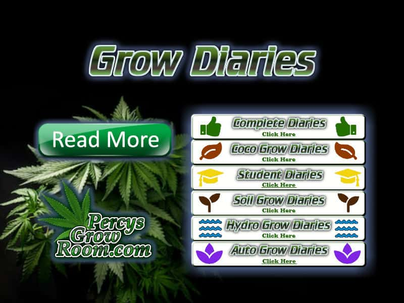 diaries of weed grows, learn how to grow weed, weed growers forum, percys grow room, cannabis growers forum,