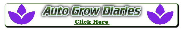 auto weed plant diaries, are autos good to grow, how to grow autos, weed growers forum, cannabis growing forum, percys grow room