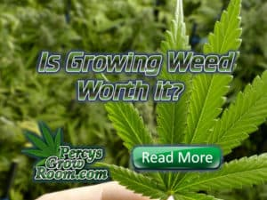 Is growing weed worth it, percys grow room, cannabis growing forum, weed groing forum, weed growers forum, learn how to grow weed