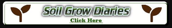 Soil grow diaries, Diaries of weed grown in soil, how to grow weed in soil, grow diaries, weed growing forum, cannabis growers forum, percys grow room