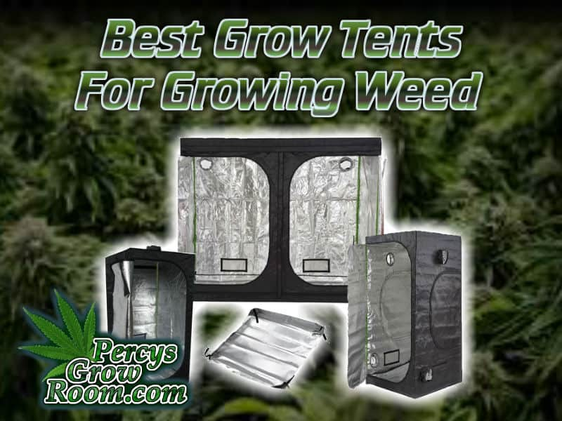best grow tents, growing weed, cannabis growing, grow tents for growing weed, cannabis plant background, percys grow room, cannabis growers forum, learn to grow weed,