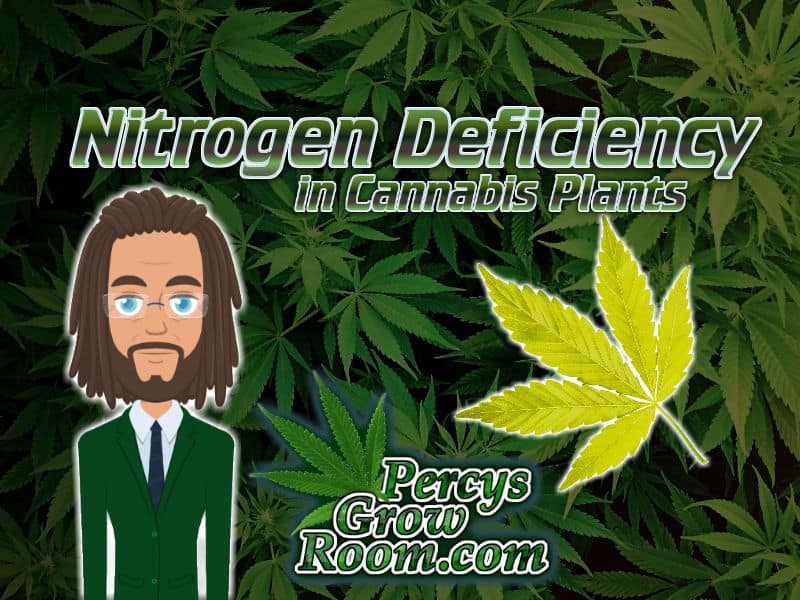 nitrogen deficiency in cannabis plants article, Percy grower, percsy grow room logog, yellow leaf of a cannabis plant, cannabis growers forum