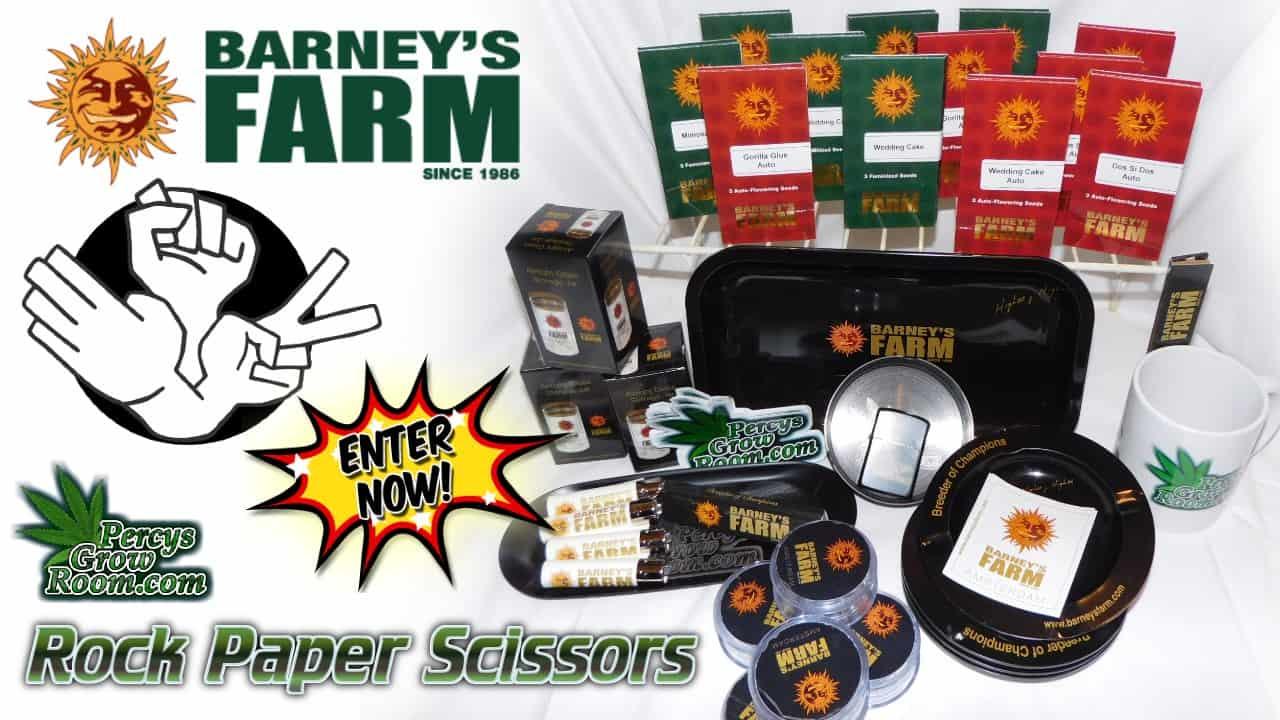 barenys farm, rock paper scissors tournament, percys grow room, cannabis growers forum,