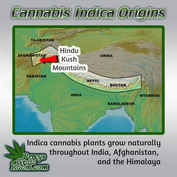 Cannabis Indica Origins Map, Hindu Kush Mountains, What is cannabis indica,