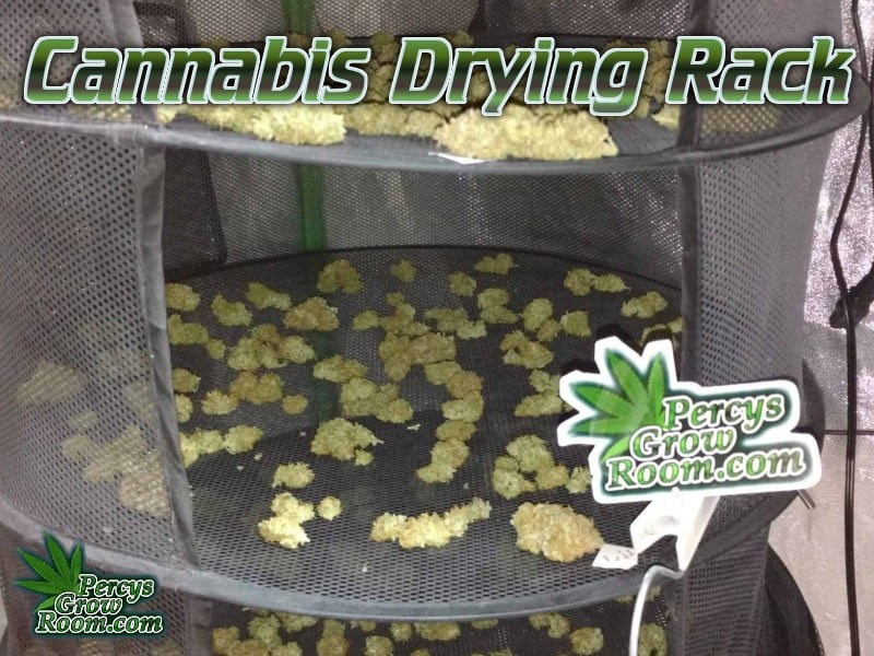 cannabis drying rack, how to dry cannabis,