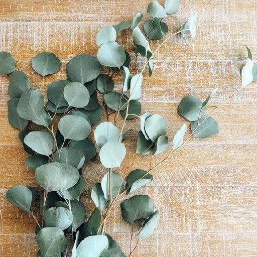eucalyptus plant, companion plants for cannabis