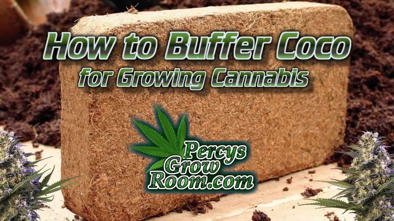 How ot buffer coco for growing cannabis, coco coir brick, percys grow room,