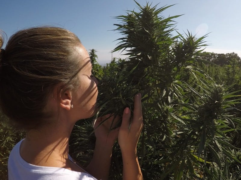 lady smelling cannabis plant, how to cover the smell of a cannabis plant outdoors, percys grow room, cannabis growers forum