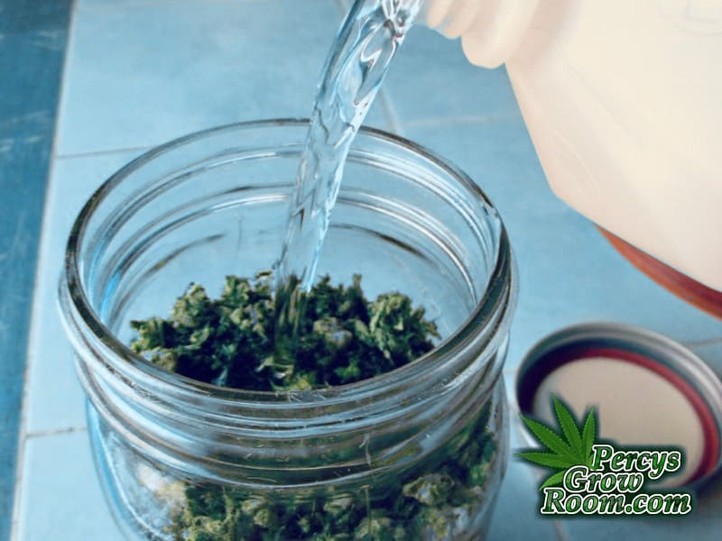 Soaking Cannabis in Jars for making FECO Oil,